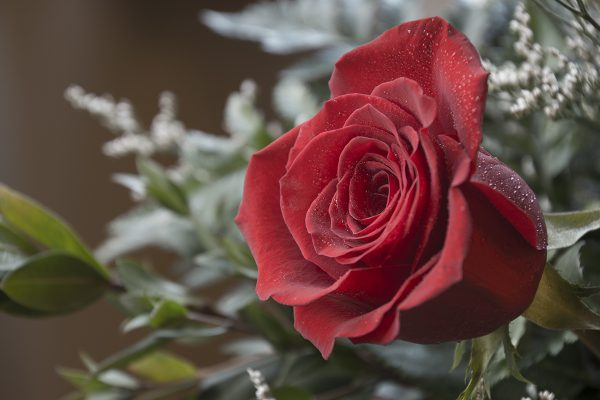 Roses - Guest View - 2015 - WEB